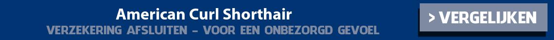 dierenverzekering-american-curl-shorthair