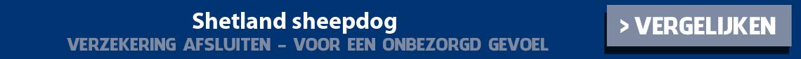 dierenverzekering-shetland-sheepdog
